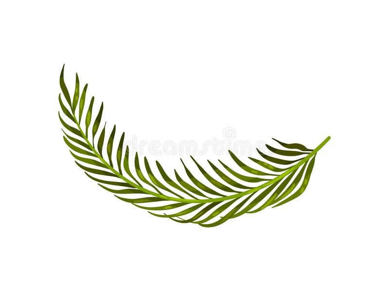 Neat stem with long leaves close-up. Vector illustration on white background. royalty free illustration