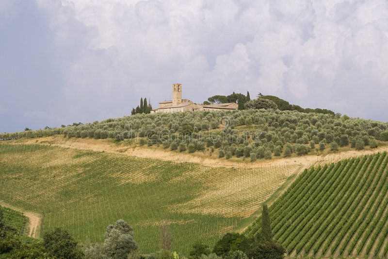 Download Neat Tuscan Vines Royalty Free Stock Photo - Image: 3544585
