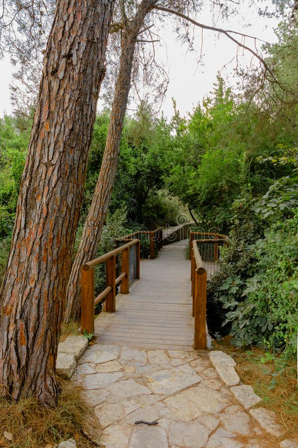 Neat wooden bridge over the forest stream. Beautiful bridge over the stream and neat paved paths in the . forest park stock photo