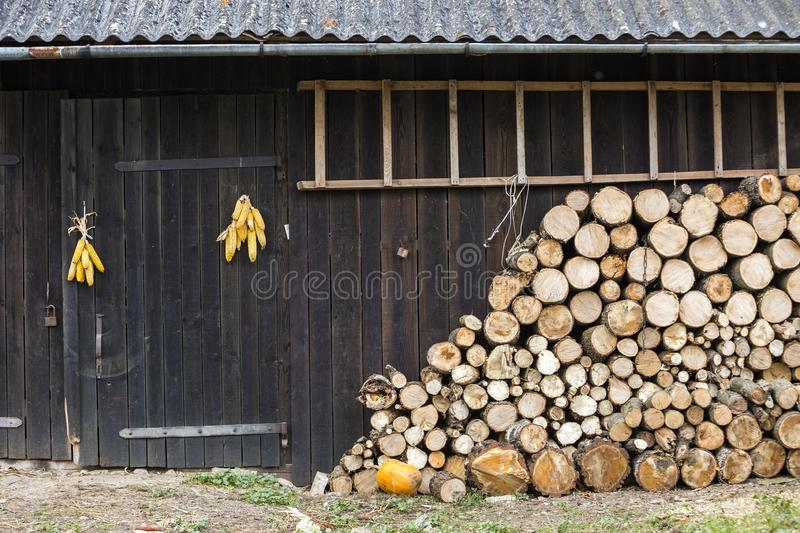 Neatly stacked big pile of chopped fire wood logs prepared for winter at vintage wooden barn wall with slate roof, ladder and corn. Cobs bundles on bright sunny stock photography