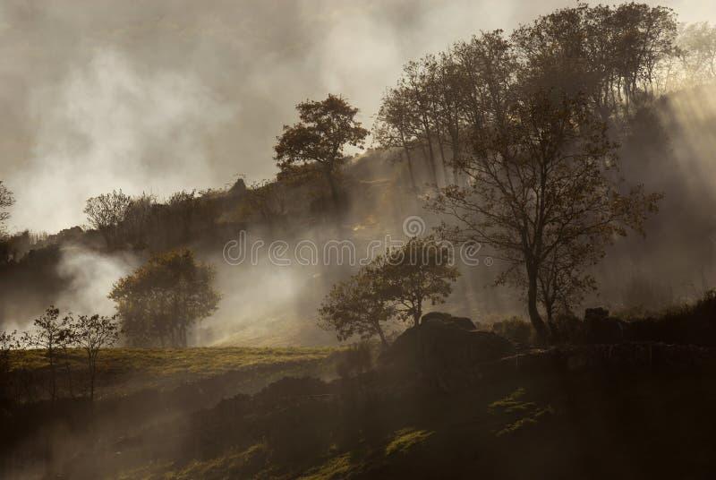 Nebbia fotografia stock libera da diritti