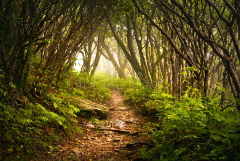 Nebbia appalachiana della traccia di escursione dei giardini Craggy spettrale immagini stock libere da diritti