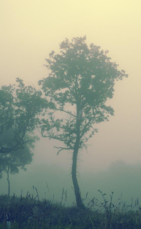 Nebbia in chianti immagine stock libera da diritti