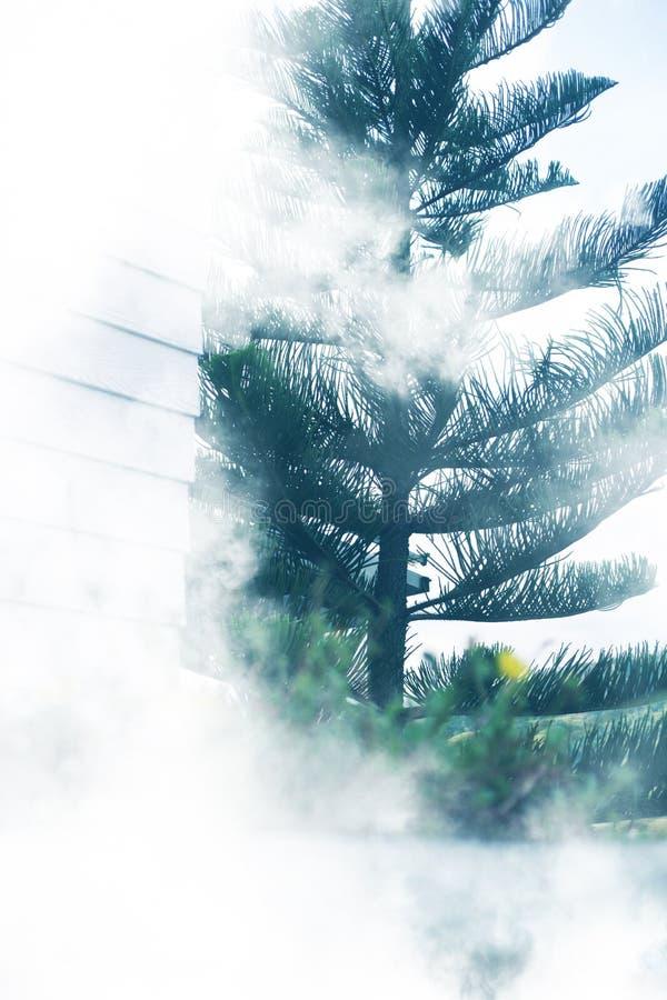 Nebbia del giardino dell'albero fotografia stock