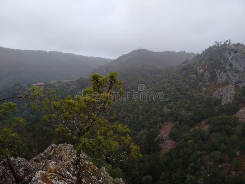 Nebbia della montagna immagine stock