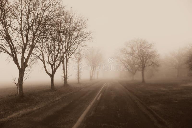 Nebbia della strada campestre, alberi fotografia stock libera da diritti