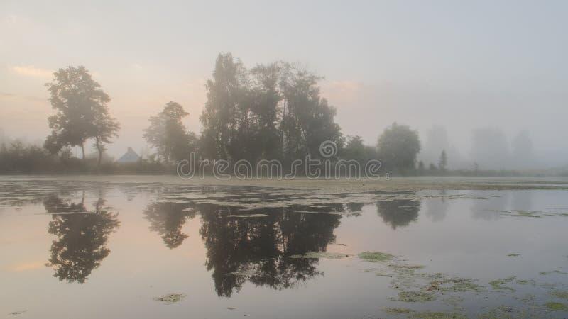 Nebbia densa ad alba sullo stagno Alberi che riflettono in acqua fotografia stock