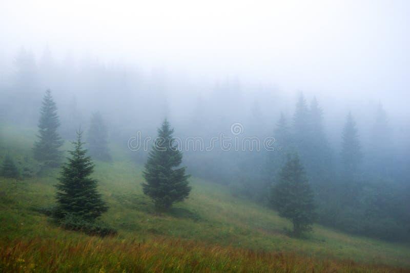 Nebbia densa nelle montagne, abete rosso nella foschia fotografie stock