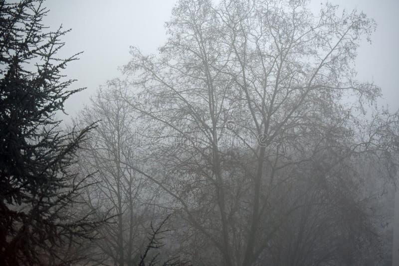 Nebbia di mattina in Germania - scena mistica fotografia stock libera da diritti