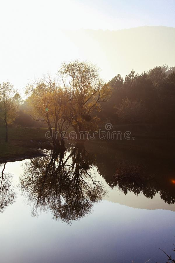 Nebbia di mattina sopra il lago Riflessione degli alberi nell'acqua del lago Idillio e rilassamento immagine stock libera da diritti