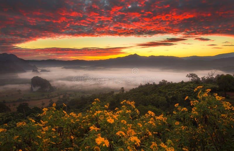 Nebbia di mattina su alba nel Phulanka, Phayao alla Tailandia immagini stock