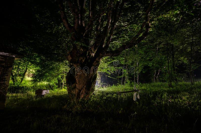 Nebbia di notte nel villaggio mysterious Luce della luna Accendere oscillazione vicino all'albero nell'iarda La luce dalla parte  immagine stock libera da diritti
