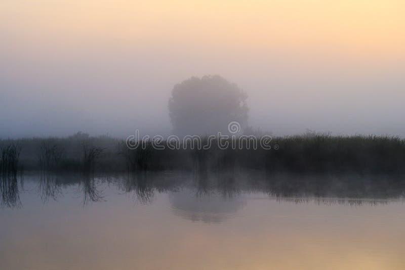 Nebbia di primo mattino e lago che riflette le canne e l'albero che stanno dall'altro lato, mattina di estate fuori della città immagine stock