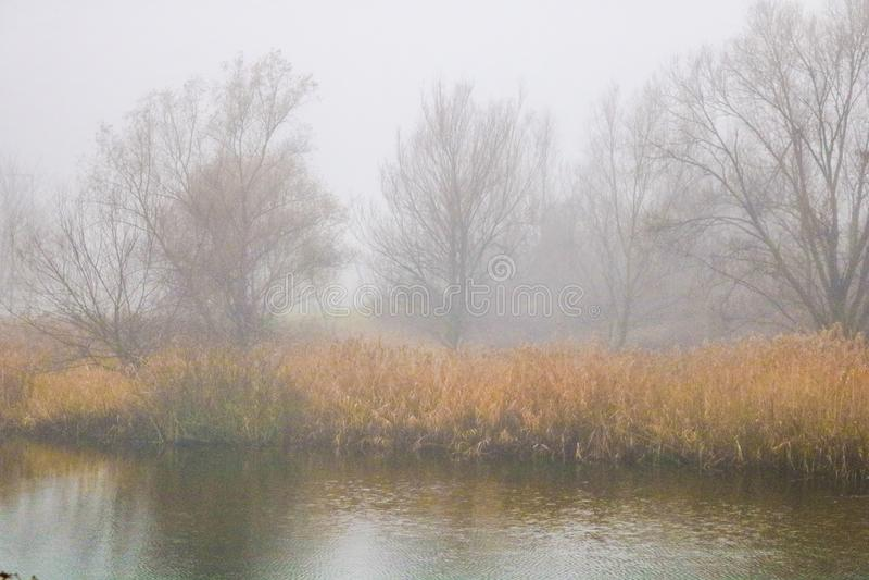 Nebbia e lago fotografie stock