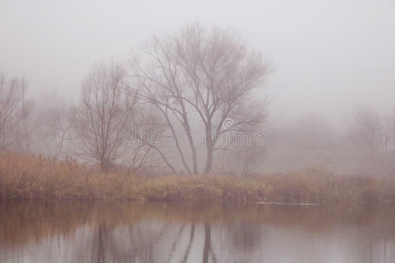 Nebbia e lago fotografie stock libere da diritti