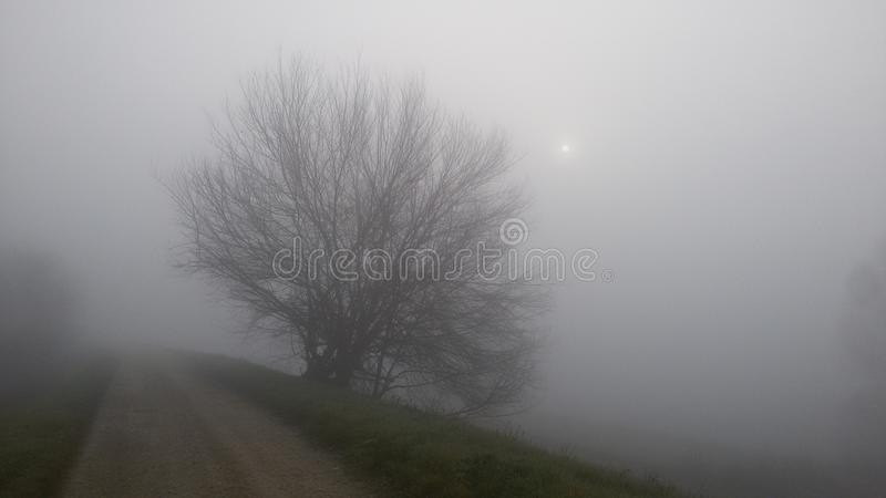 Nebbia e sole fotografia stock