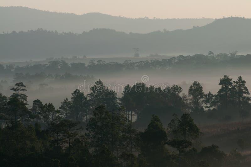 Nebbia nebbiosa di mattina stupefacente con gli alberi della siluetta in Tailandia fotografie stock