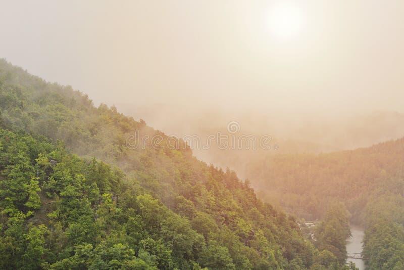 Nebbia nebbiosa sugli alberi e fiume con il sole di mattina, paesaggio ceco immagini stock