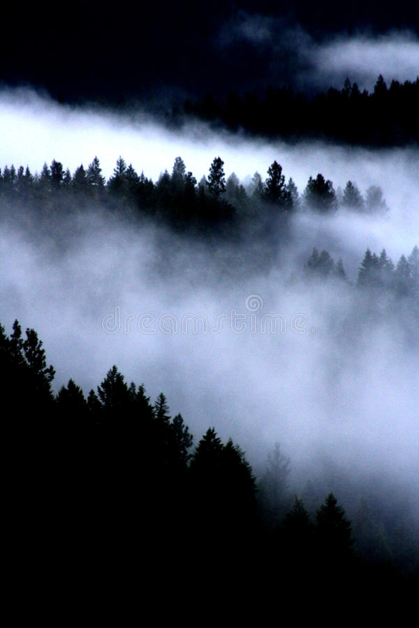 Nebbia negli alberi fotografia stock