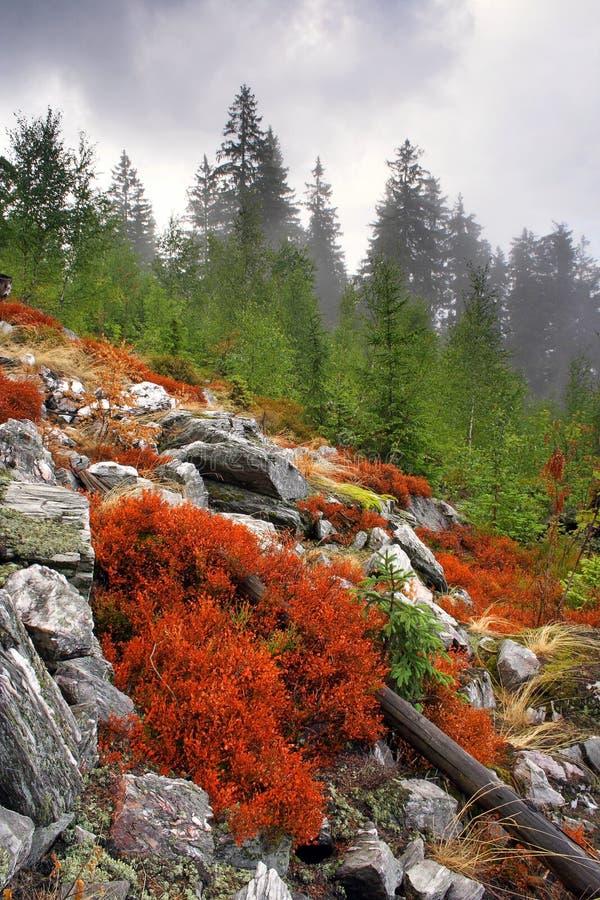Nebbia nella foresta immagine stock libera da diritti