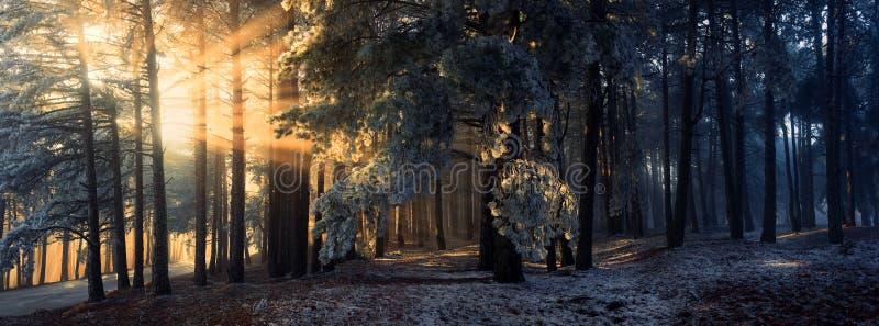Nebbia nella foresta immagine stock