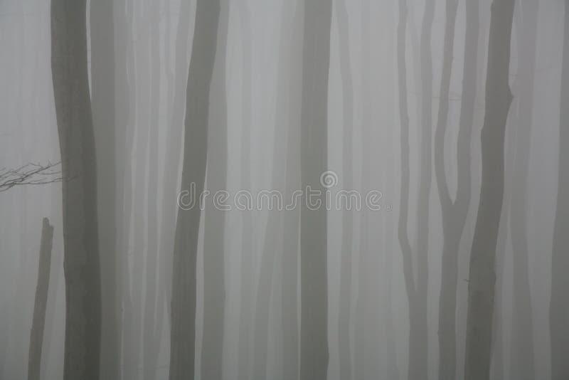 Nebbia nella foresta fotografia stock
