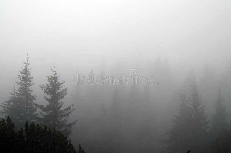 Nebbia nella foresta fotografia stock libera da diritti
