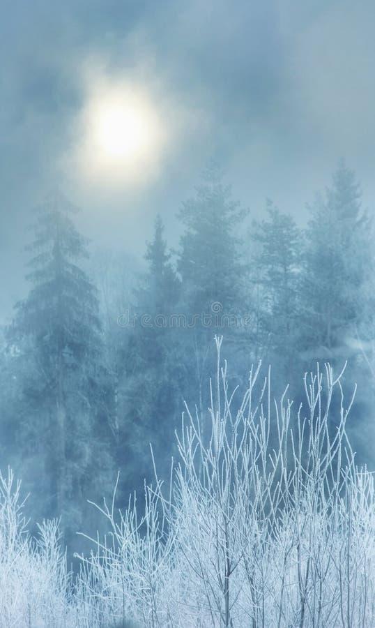 Nebbia nella foresta di inverno fotografia stock