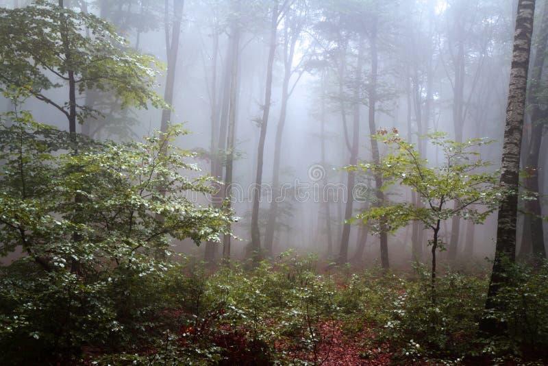 Nebbia nella foresta durante l'autunno fotografia stock libera da diritti