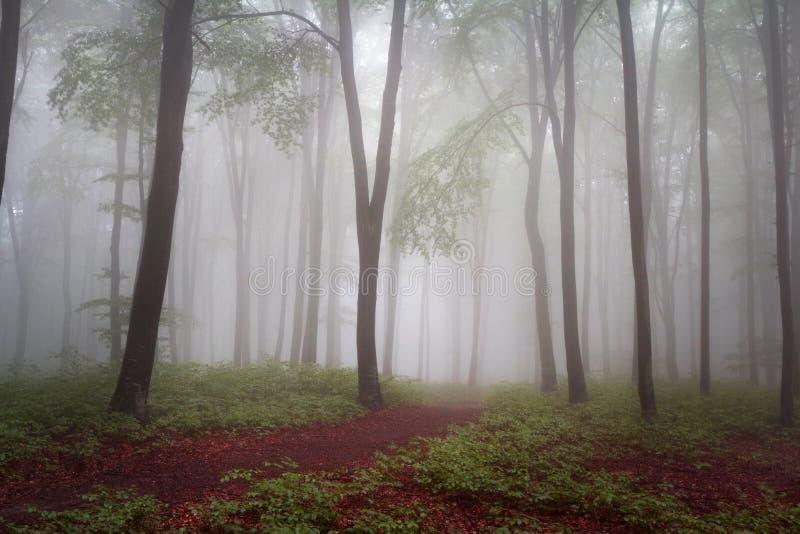 Nebbia nella foresta durante l'autunno fotografia stock