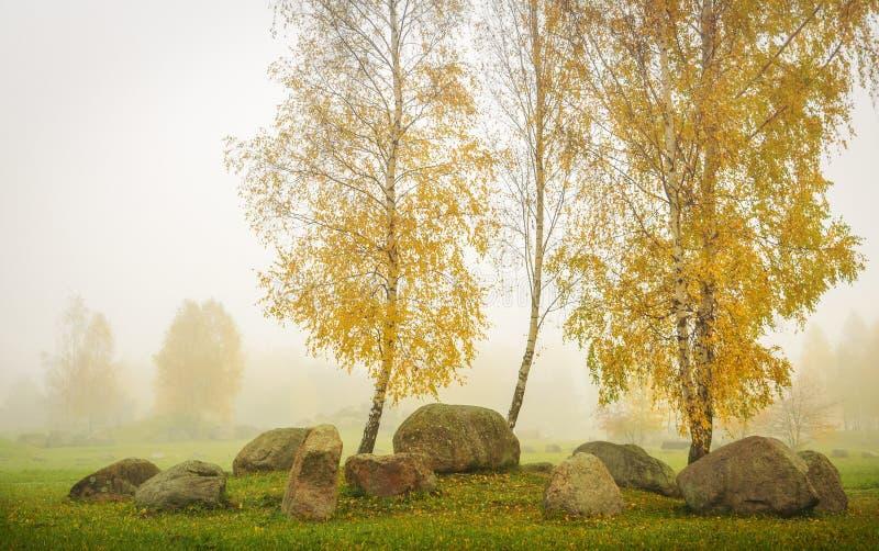 Nebbia in parco con le betulle fotografia stock