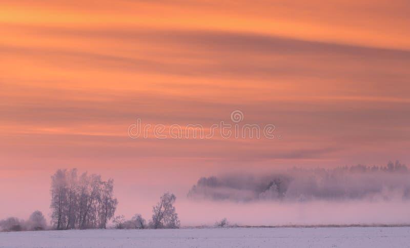 Nebbia rosa nella mattina di inverno fotografia stock libera da diritti
