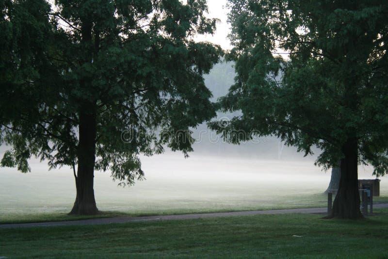 Nebbia in sosta immagine stock