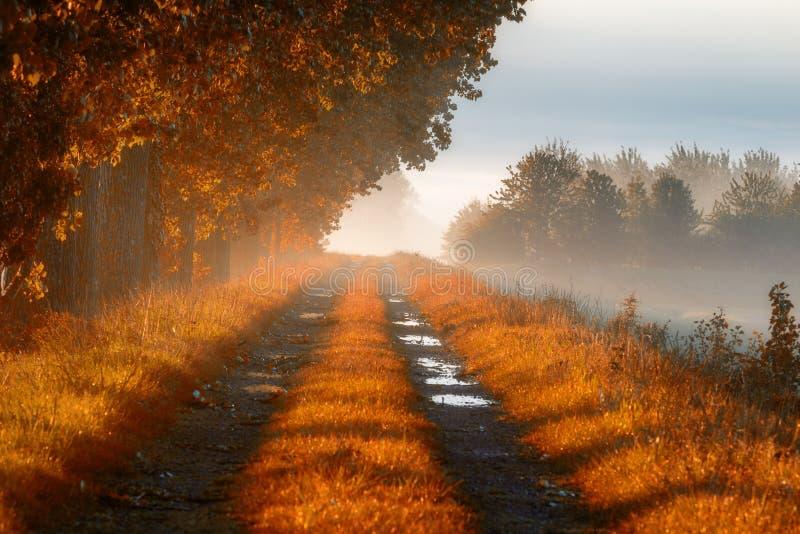 Nebbia spessa di mattina della foschia del sentiero forestale di mattina in autunno fotografia stock libera da diritti