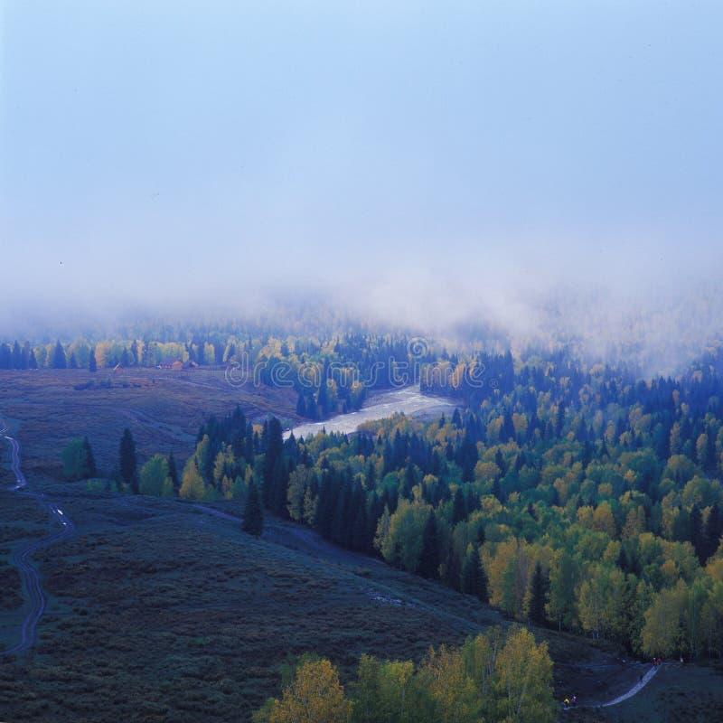 Nebbia su una foresta fotografia stock libera da diritti