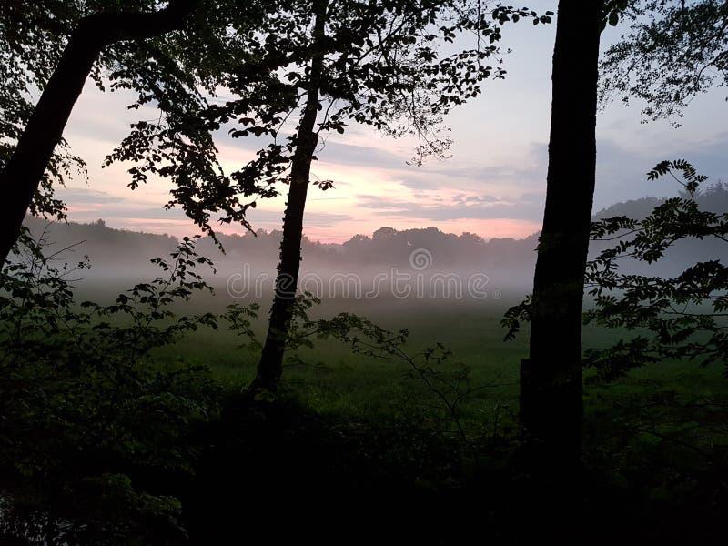 Nebbia sul campo alla foresta fotografia stock