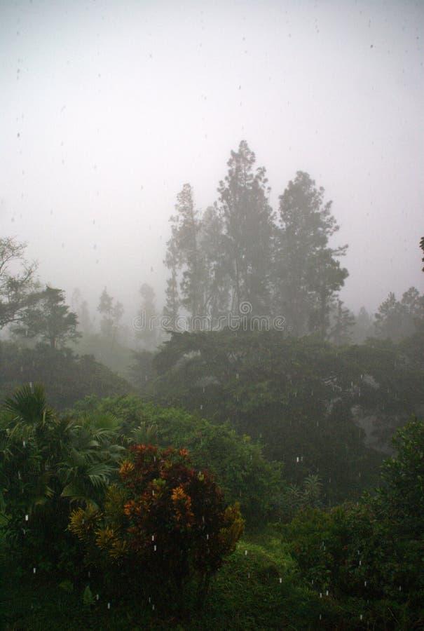 Nebbia tropicale fotografie stock libere da diritti