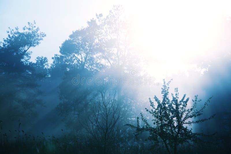 Nebbioso fuori dalla foresta fotografie stock libere da diritti