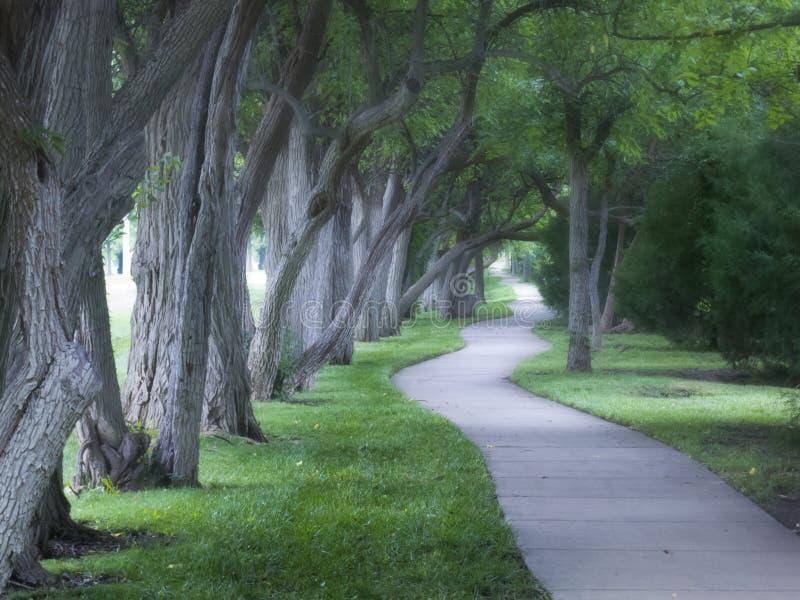 Nebbioso percorso di camminata allineato bello albero sulla mattina nebbiosa fotografia stock libera da diritti