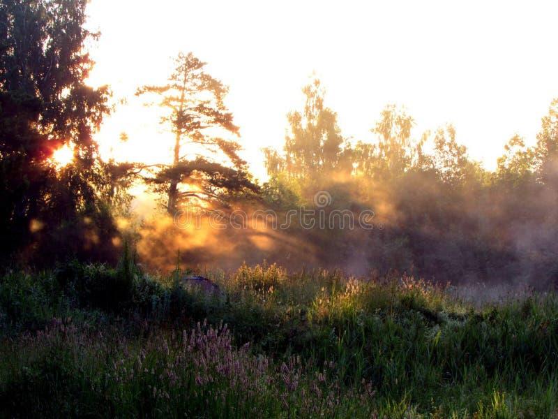 Nebel über dem See lizenzfreie stockfotos