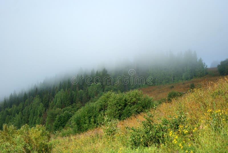Nebel über einer Waldlichtung stockbilder