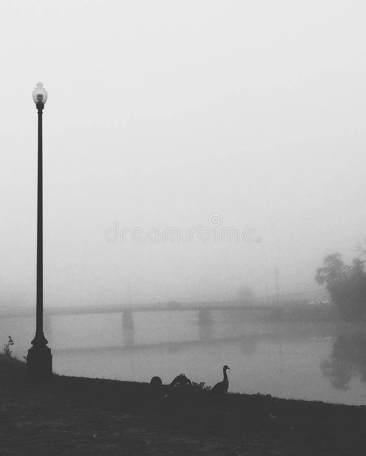 Nebel über einer Wasserwiese stockfotografie