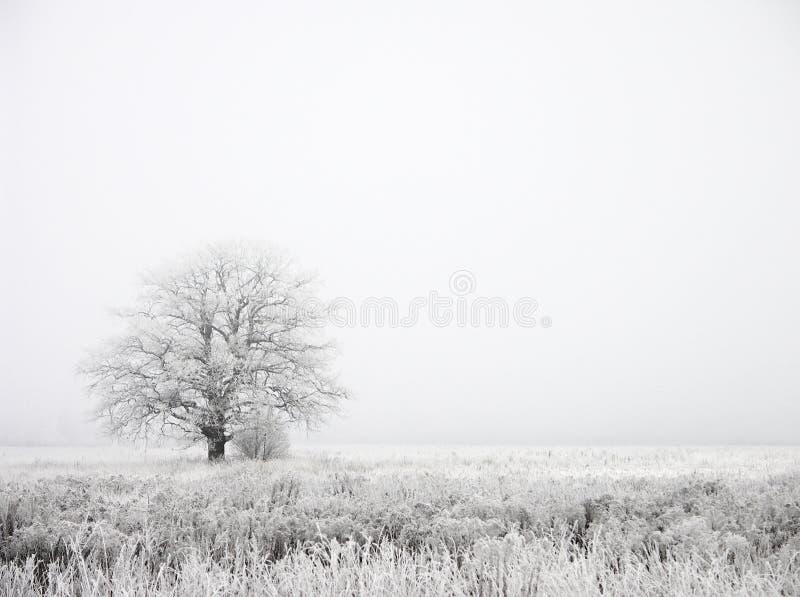 Nebel lizenzfreies stockbild