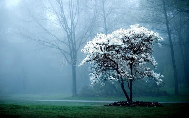 nebel stockfoto