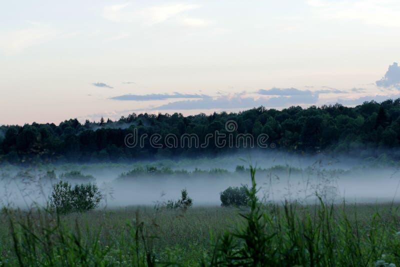 Nebel auf dem Gebiet stockbild