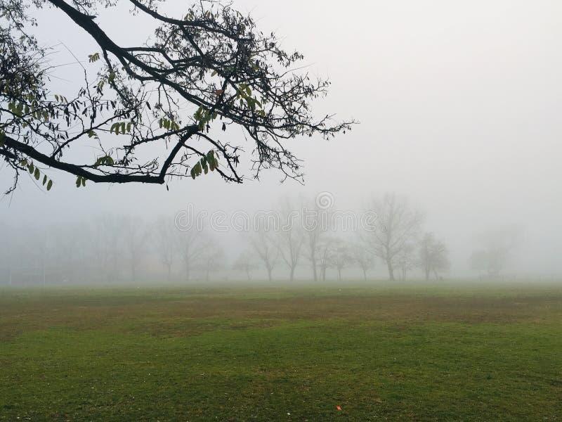 Nebel auf den Gebieten lizenzfreie stockfotos