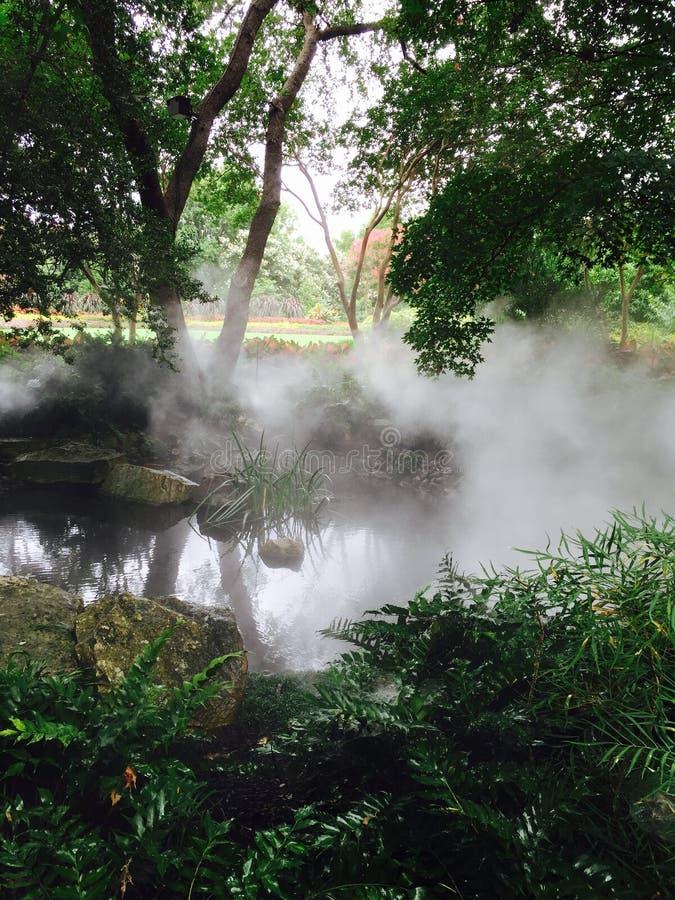 Nebel auf grünen Sträuchen und Bäumen im Garten stockfotos