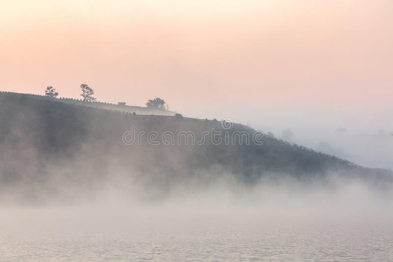 Nebel, Berg, Kiefernwald lizenzfreies stockfoto