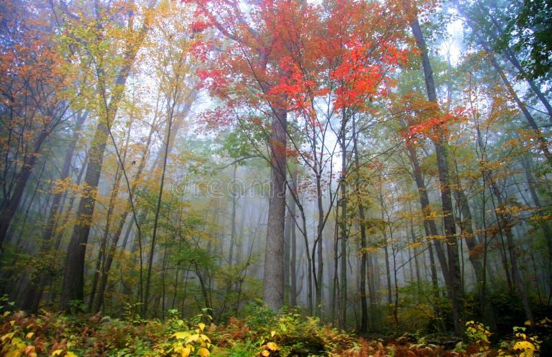 Nebel in den Allegheny Bergen stockfotografie