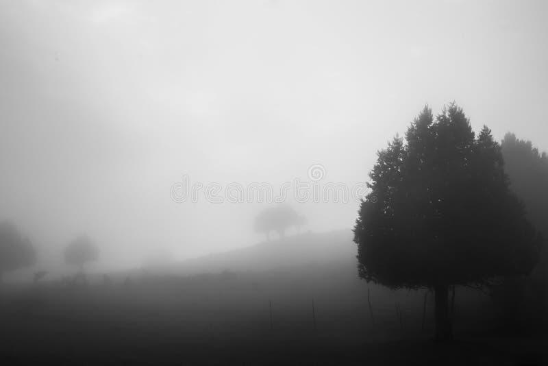 Nebel in den Bergen lizenzfreie stockfotos